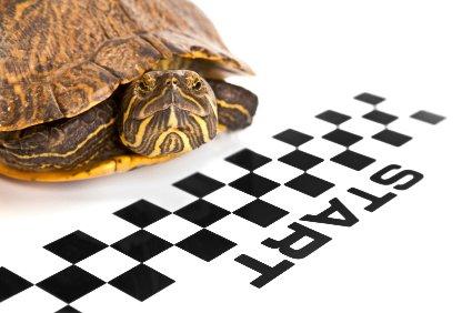 Turtle-speed