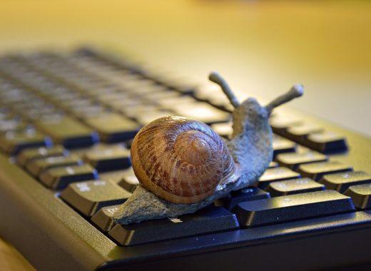 snail-3901655_1280-520x380