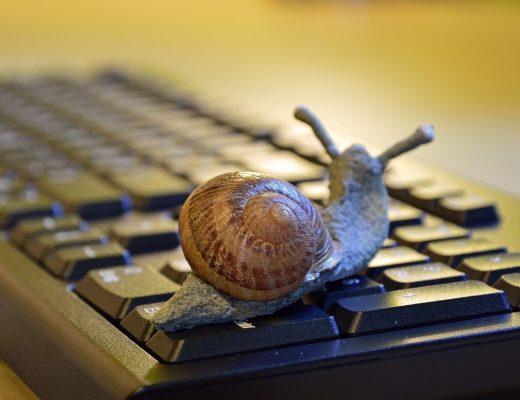 snail-3901655_1280-520x400