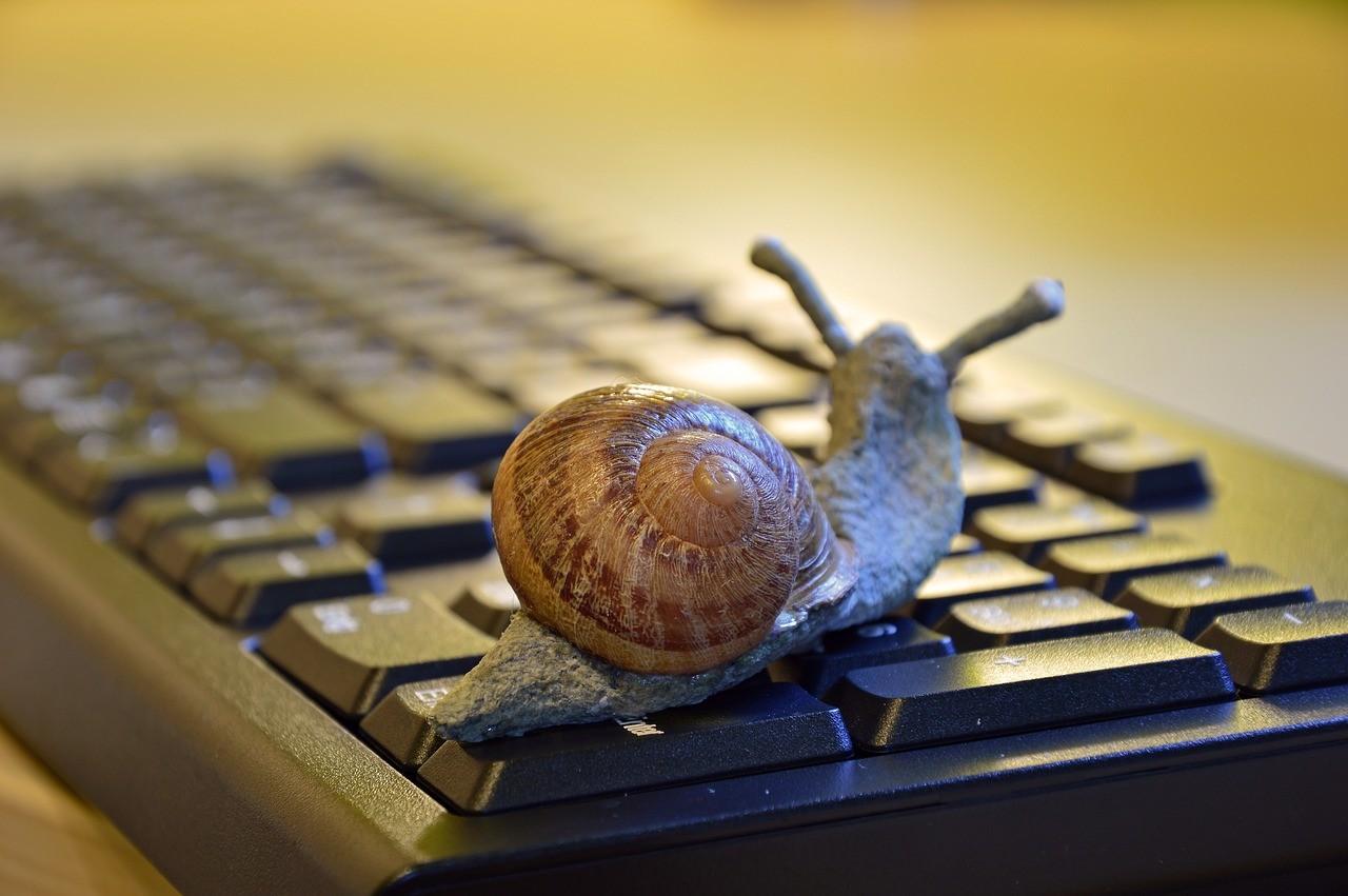 snail-3901655_1280