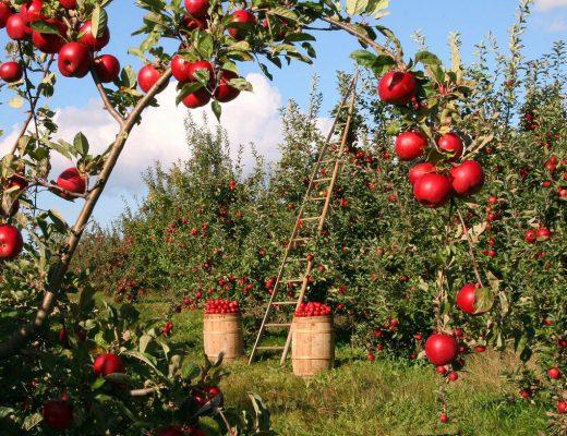 apple-1873078_1280-520x400