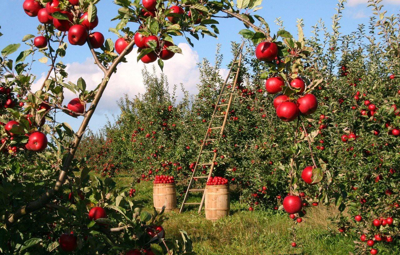 apple-1873078_1280